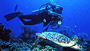 Cayman Islands, Grand Cayman, Vacation Diving Resort, Turtle diving - The Reef